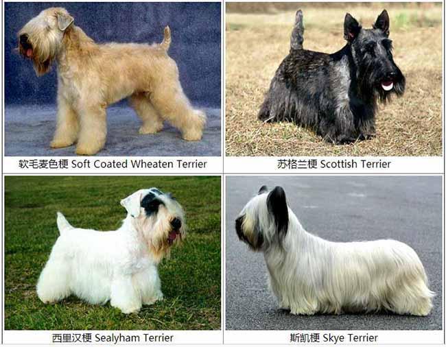 世界名犬种类大全图鉴,八大种类史上最全!